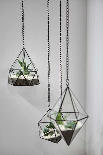 Hanging vases with plants